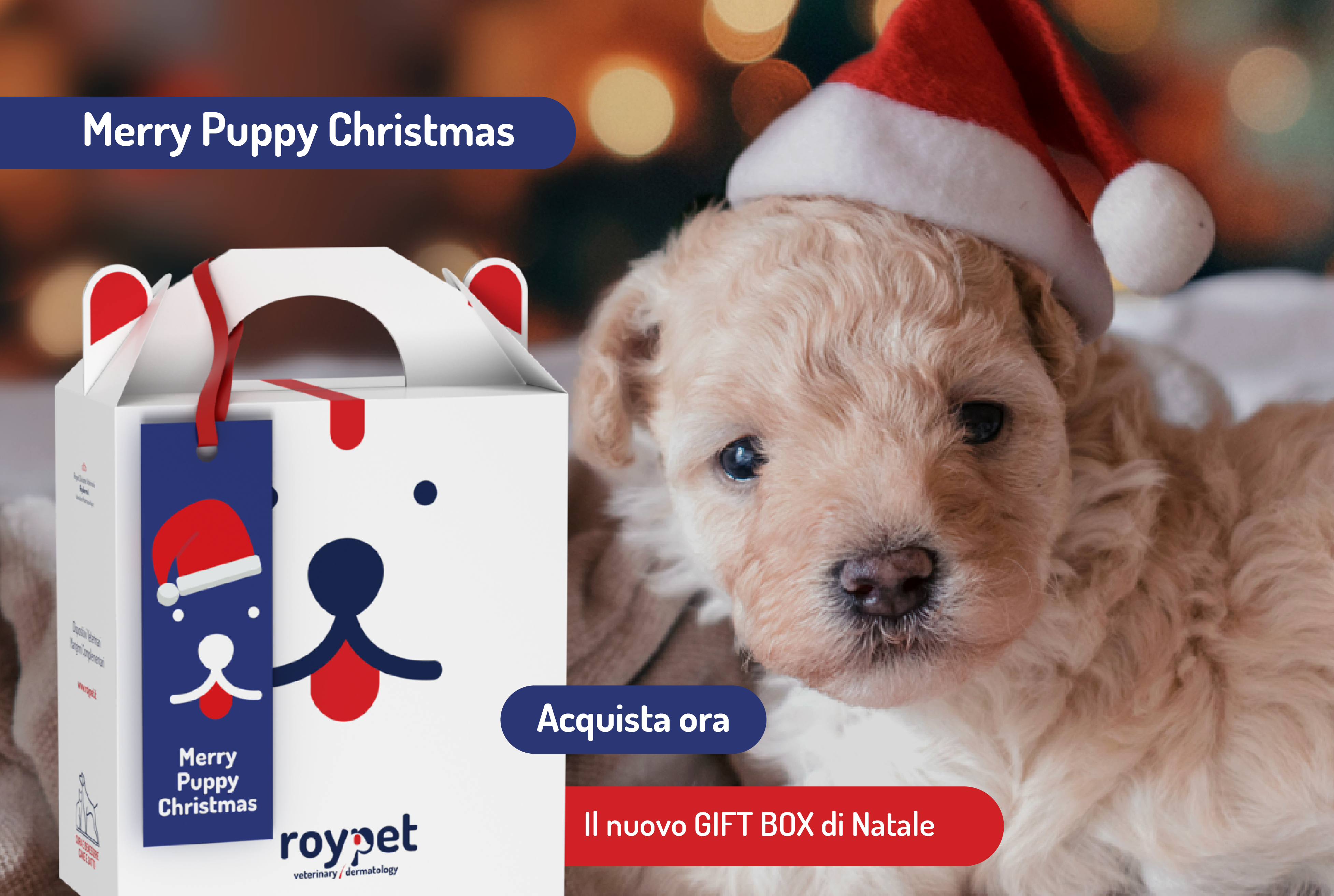 roypet-gift-box-natale-dog