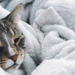 4 problemi salute gatti